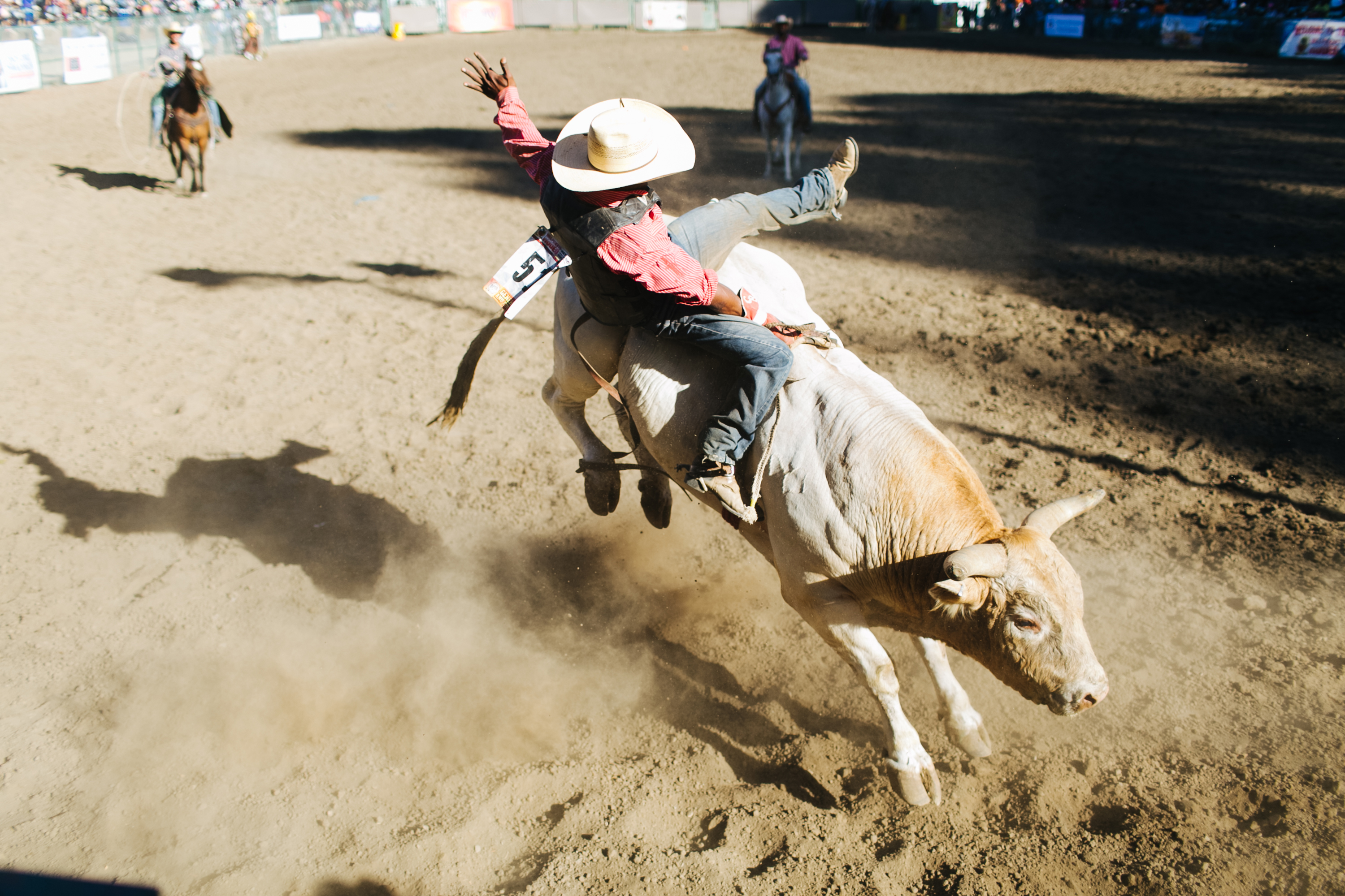 Dating a bull rider quotes and sayings