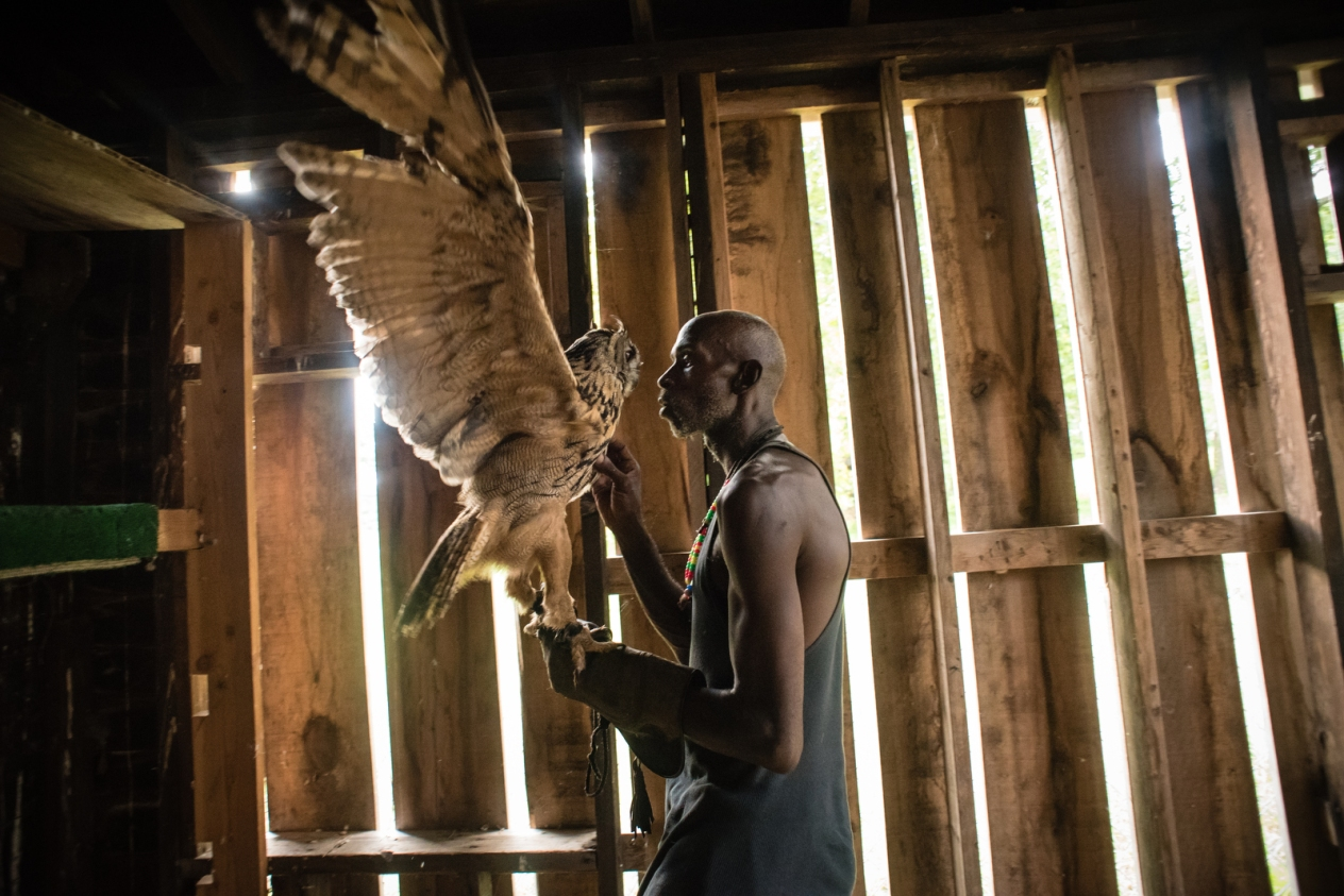 The black falconer: One man's love for birds in pictures